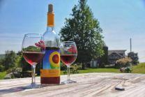 xhopkins-vineyard 8